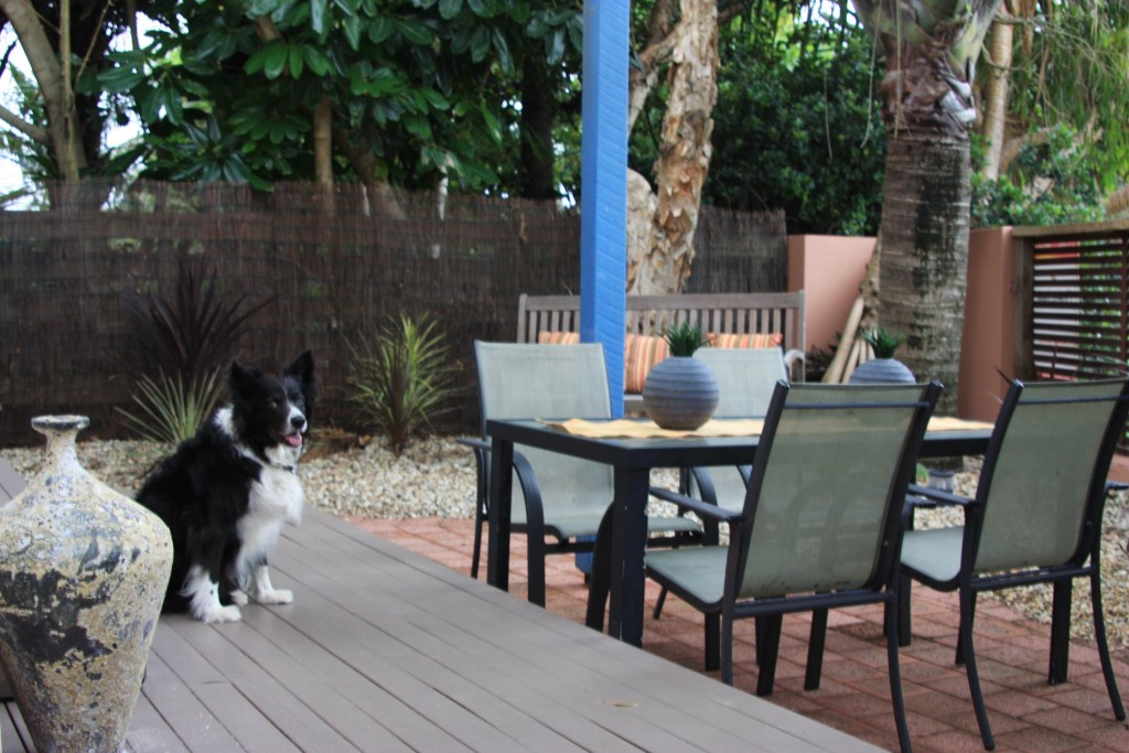 pet friendly accommodation in Hunter Valley
