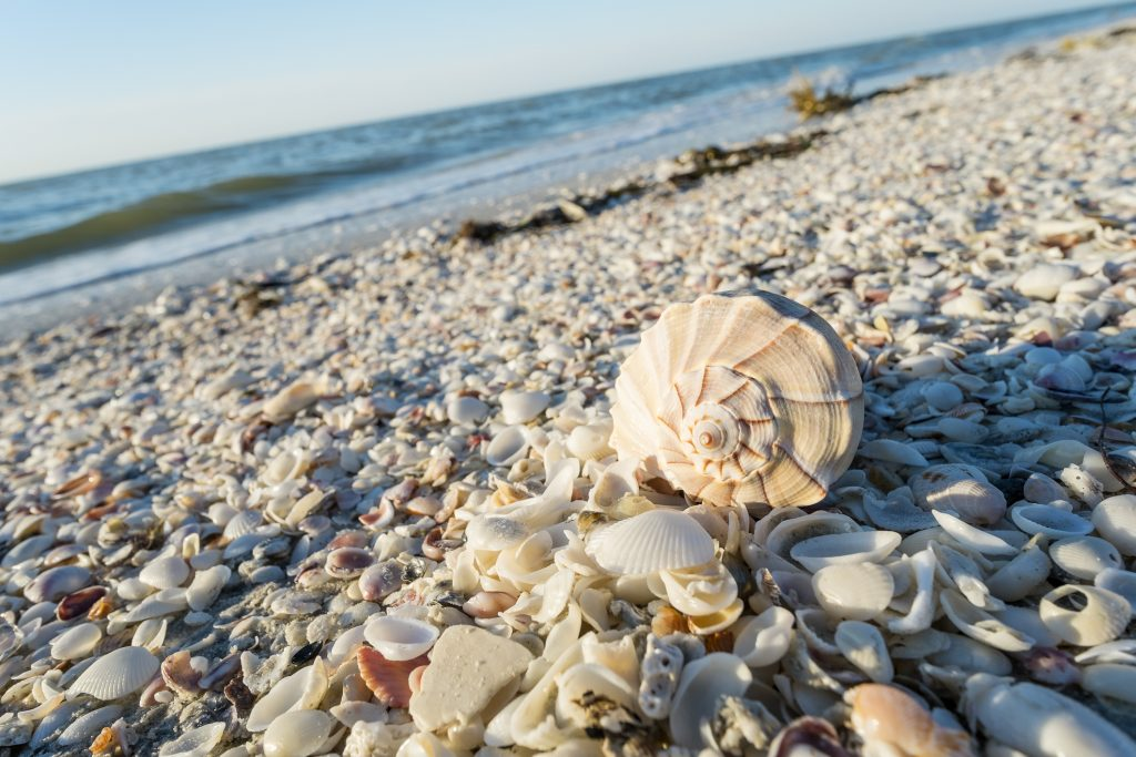 5 Best Beaches To Go Shelling In Florida